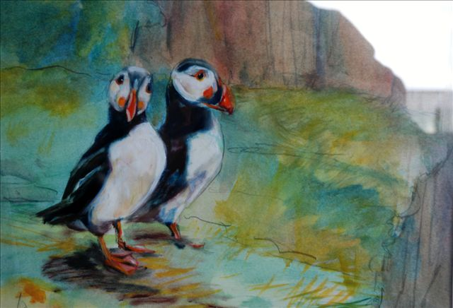 Puffins  at St. Kilda and the Shiants